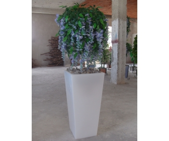 Plantes tunisie for Vente plantes artificielles tunisie