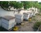 5 Ruches pleines d'abeilles