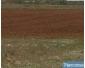 Terrain agricole à Bizerte à vendre