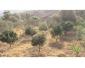 Terrain agricole à Jendouba à vendre