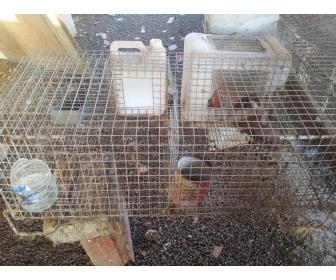 cages pour lapins occasions sousse. Black Bedroom Furniture Sets. Home Design Ideas