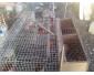 Cages pour lapins occasions à Sousse