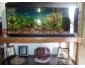 Aquarium occasion à vendre à Ben-Arous