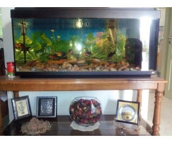 aquarium occasion 224 vendre 224 ben arous