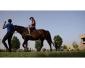 Cours d'équitation au Club Équestre Jafoura